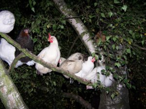 Hühnerstall selbst gebaut